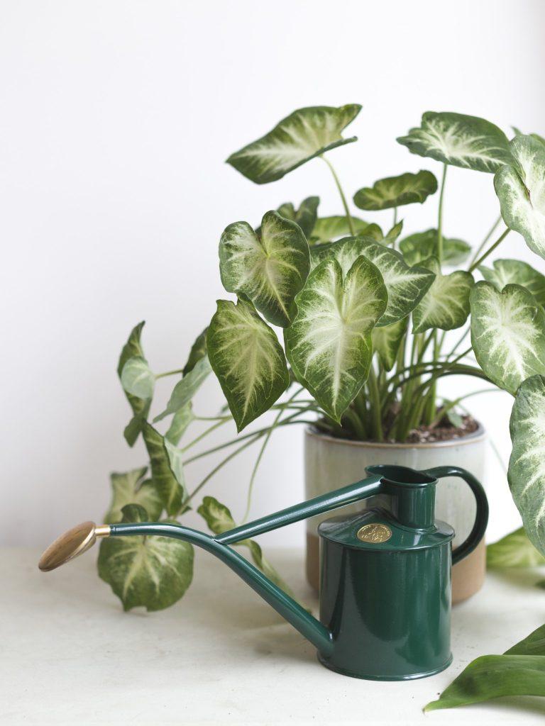Koop Lokaal - The Plant Corner