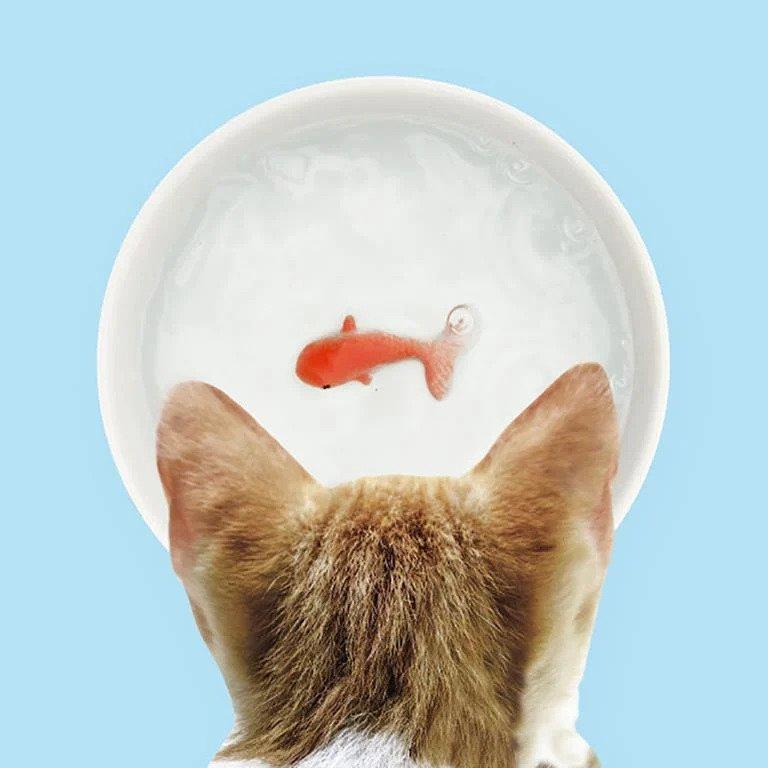 Huisdier cadeau - Suck UK Waterbak Kat 3D Goudvis